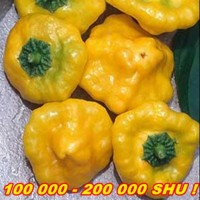 PÁLIVÉ CHILLI PAPRIČKY JAMAICAN HOT YELLOW/10SEMEN/